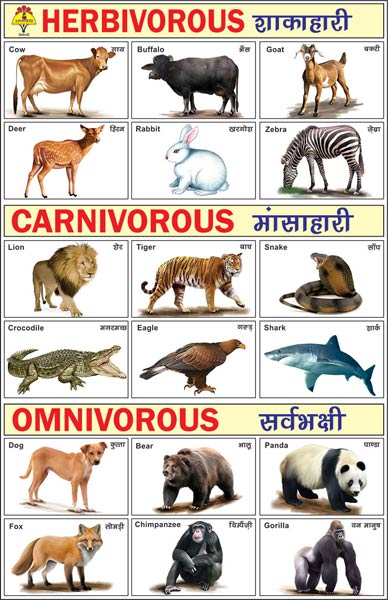 Herbivorous Carnivorous & Omnivorous Picture Pads