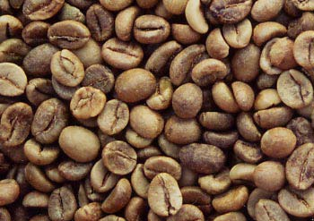 Unwashed Robusta Green Coffee Beans (BHP Grade)