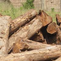 Ghana Teak Wood - 04