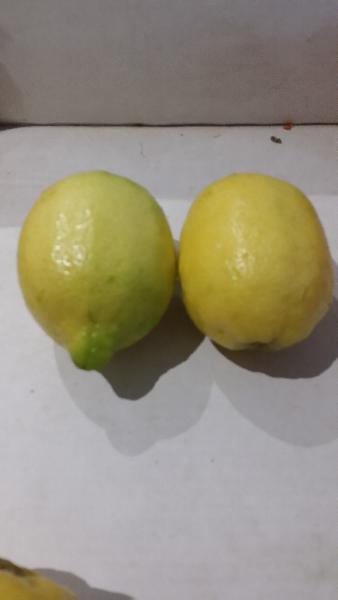 Australia Lemon 04