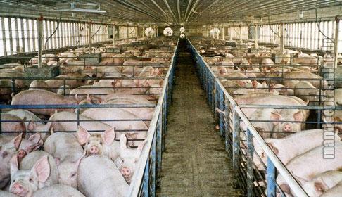 Pig Farming Services