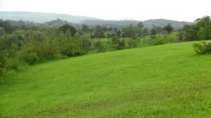 Agricultural Land Services