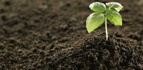 Weedicide Fertilizer