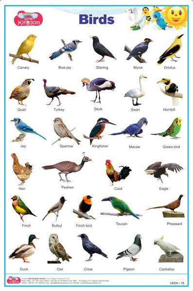 Summary -> Birds Name In Hindi And English With Pictures