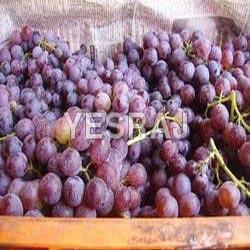 Fresh Muscat Grapes