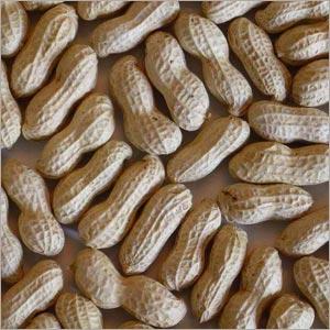 Groundnut Seeds