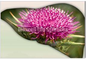 Liverex Herbal Liver Stimulant