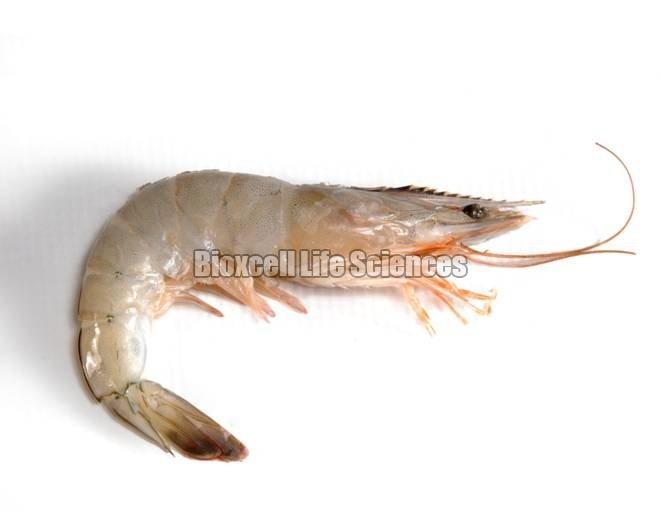 Livnex Shrimp Probiotics