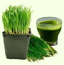Wheatgrass Juice 05