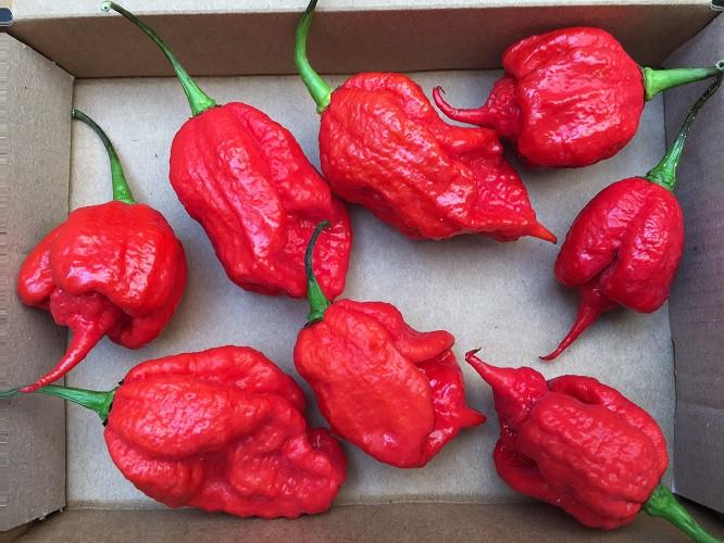 Chilii Pepper