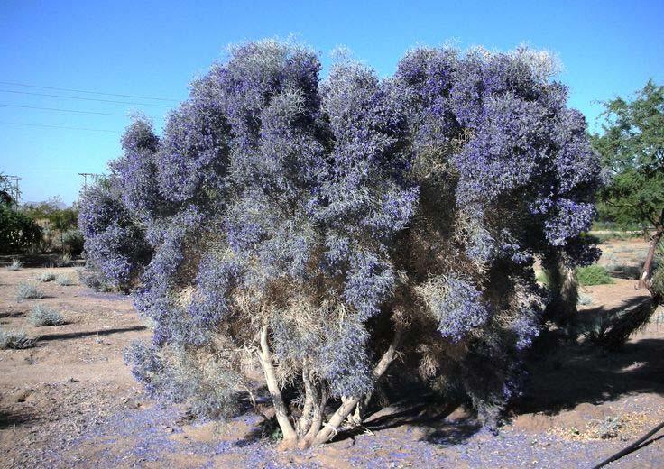 Arid Zone Species