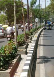 Road Divider Plants