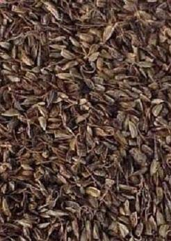 Stylo Hamata Seeds