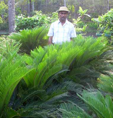 Attractive landscape plants landscape plants native for Sri lankan landscaping plants