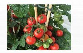 Organic Vegetable Farming 02