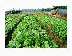 Organic Vegetable Farming 03