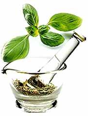 Herbal Plant Extracts Brahmi Extract Gooseberry Extract