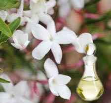 Arabian Jasmine Absolute Oil