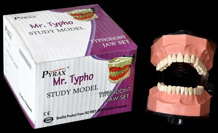 Typhodont Jaw Set