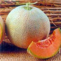 Muskmelon Seeds