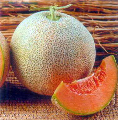 What is a Muskmelon? (with pictures)
