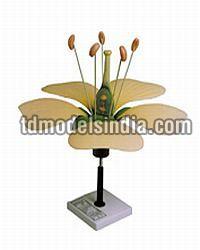 Botany Model