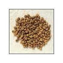 Nirmali Seeds (Strychnos Potatorum)