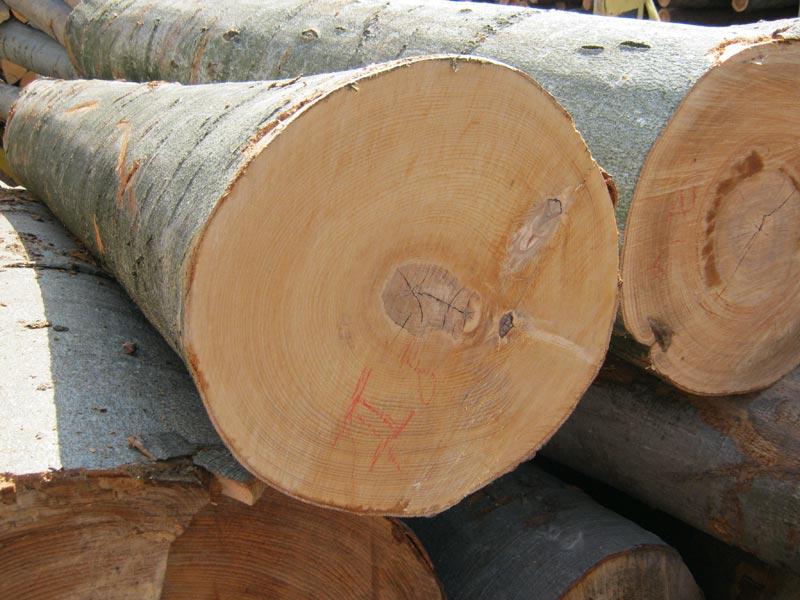Beech wood logs european wooden