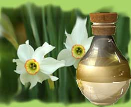 Narcissus Oil