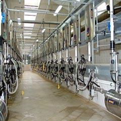 Dairies Chemicals