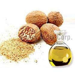 Mace Seed Extract