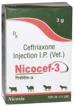 Nicocef Injection