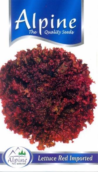 Red Lettuce Seeds
