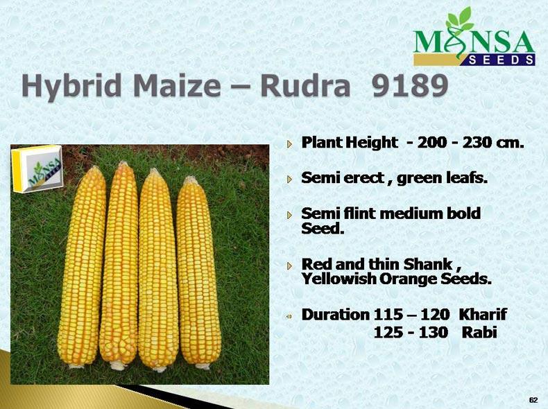Maize Seeds (Rudra-9189) 01