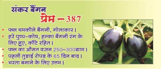 Brinjal Seeds (Prem - 387) 02