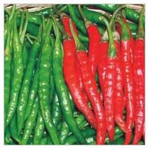 Chilli Seeds (AGNI - 324)