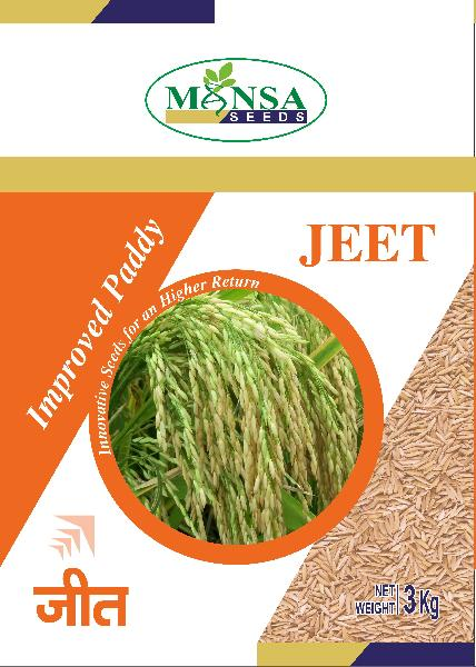 Improved Paddy Seeds 01