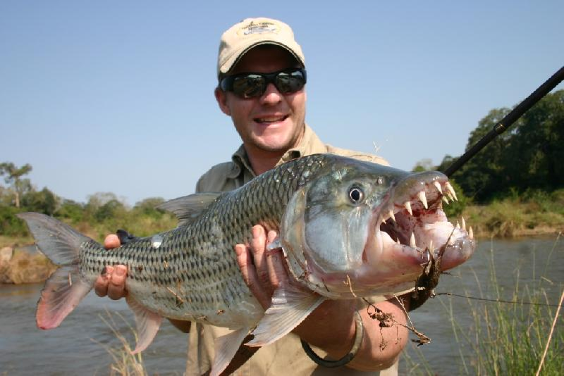 African Tiger Fish