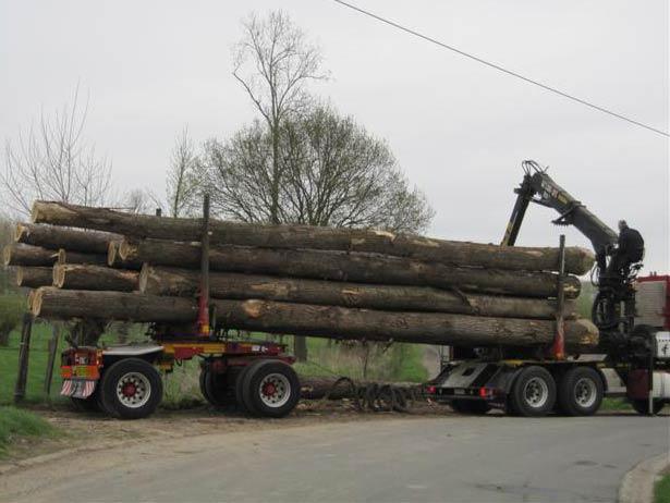 where to buy poplar wood