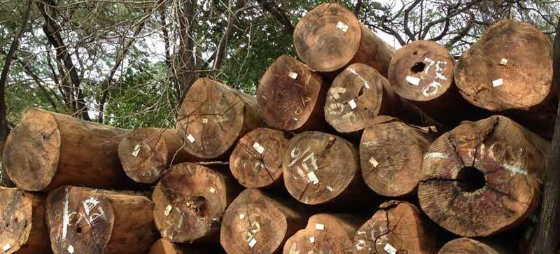 Mora Wood Logs