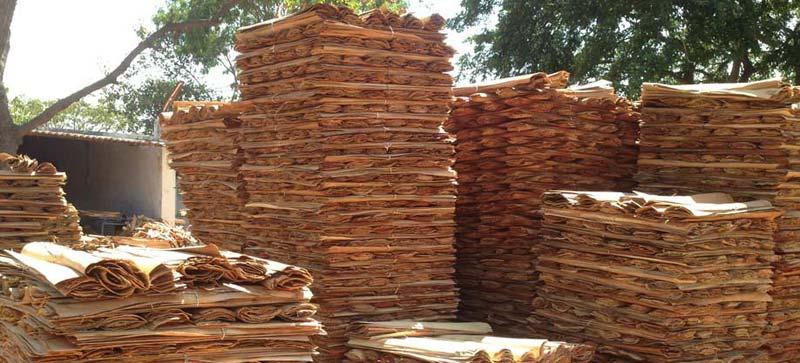 Red Gum Wood