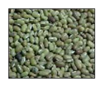 Bamboo Beans