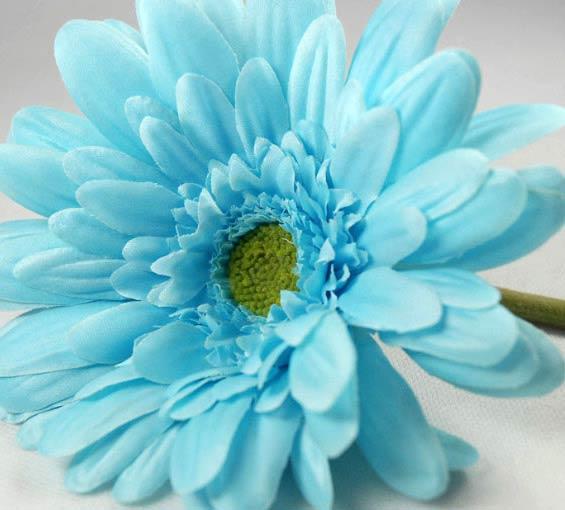 Blue Daisy Flowers