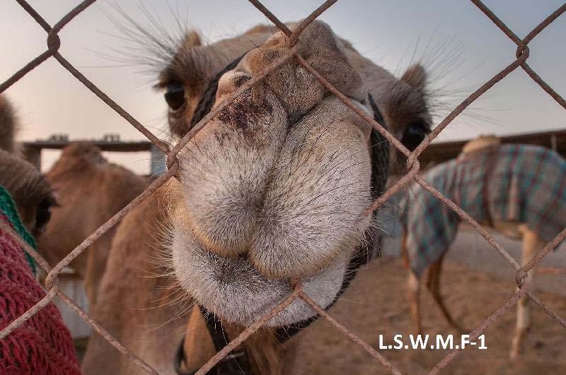 Livestock Fencing 02