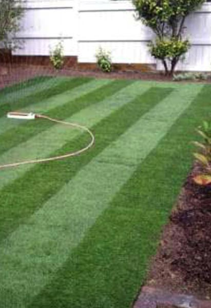 Natural Grass for Cricket Ground