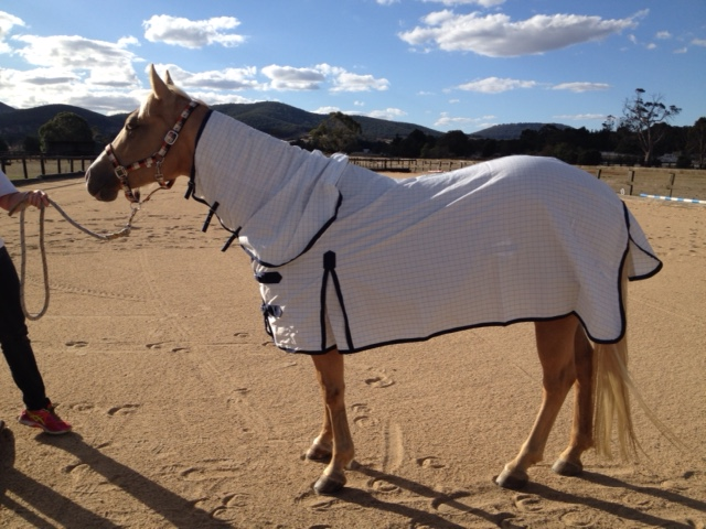 Gtl Horse Rugs Ideas