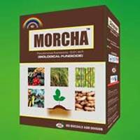Morcha (Pseudomonas)