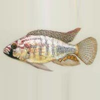 Mali Fish