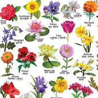 22x28 Flower Charts