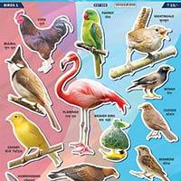 Bird EduStickers